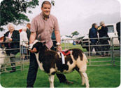 Champion Kelso 2002 – a favourite ewe